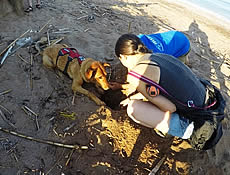 A dog trained to sniff for turtle conservation!