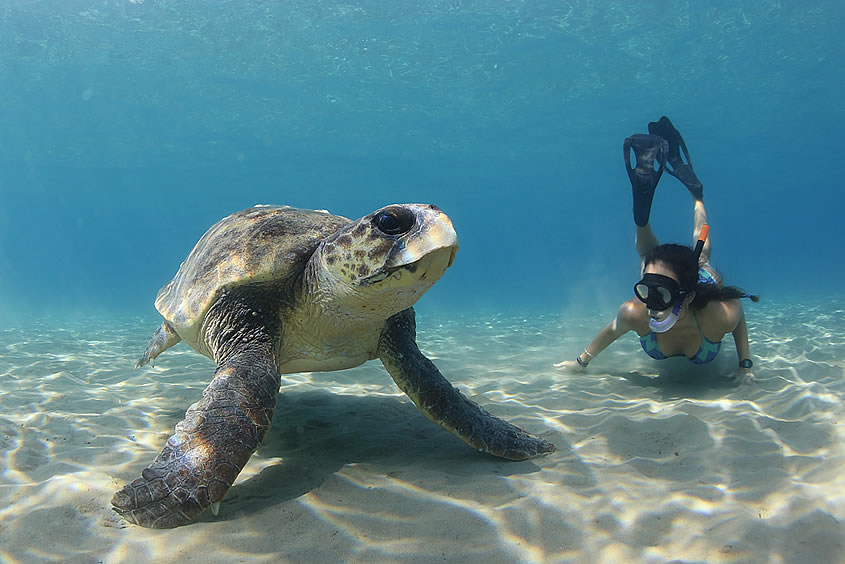 Eva Horajo Berna continues her sea turtle journey around the world!