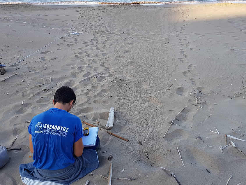 The protection of the Loggerhead Sea turtles in Laganas Bay, Zakynthos, Greece during 2019