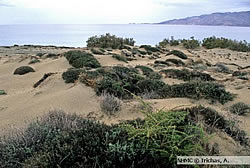 The importance of sand dunes