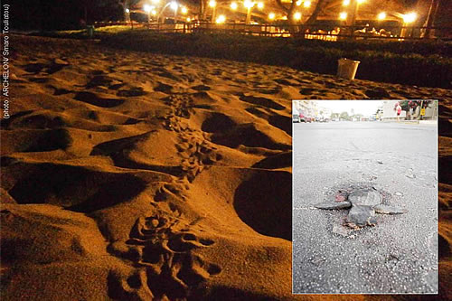 When the first Caretta caretta hatchlings of Kyparissiakos Gulf couldn't find their way to sea