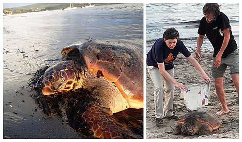 POLYCASTE of Gialova and the seminars for sea turtle rescuers