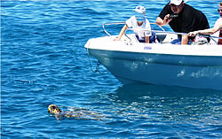 Bay of Laganas, Zakynthos: Attention to turtles at sea!