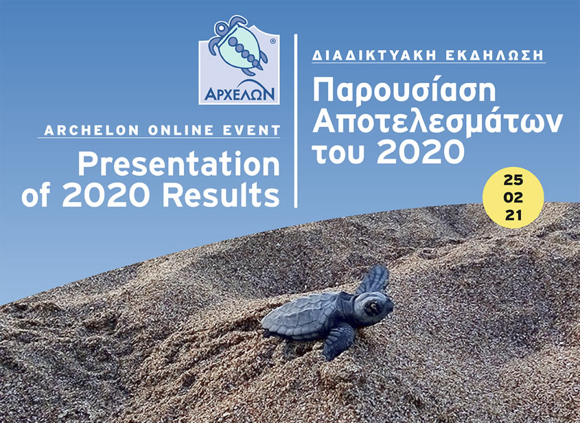 Want to learn how sea turtles did in 2020?