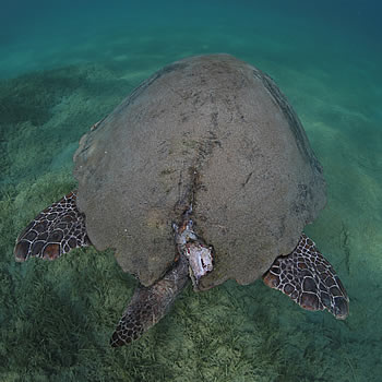 """Social media posts help shed light on the impacts of """"turtle spotting"""" in Laganas bay, Zakynthos"""