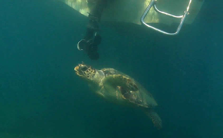 Collisions of boats with sea turtles continue at Zakynthos National Marine Park - When will fines be imposed?