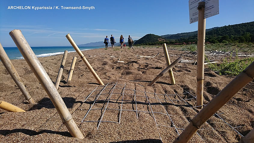 An unexpectedly high number of loggerhead nests in Greece and throughout the Mediterranean makes 2020 stand out as the Year of the Sea Turtle